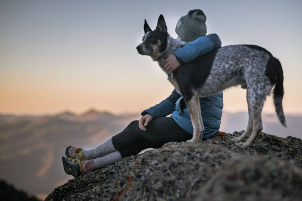 In Spagna è indispesabile che il tuo animale domestico abbia l'assicurazione verso terzi.